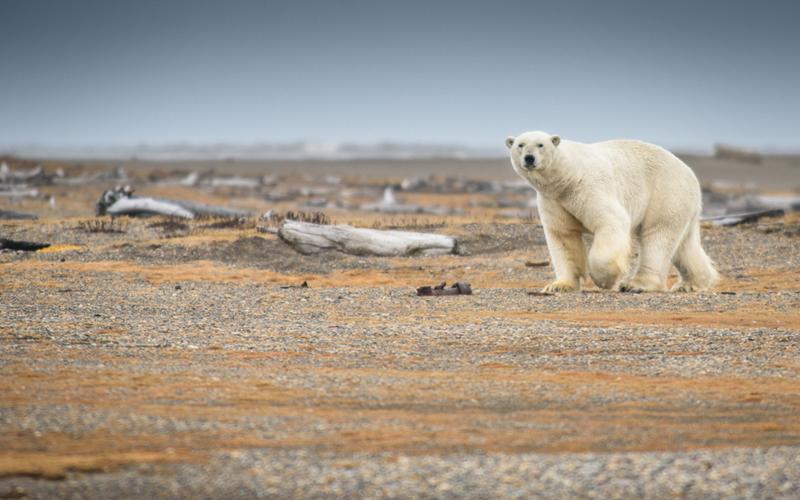 Cambio climático y pensamiento crítico