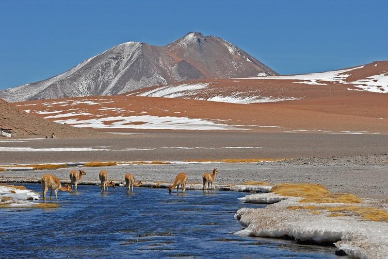 Servicio de Biodiversidad y Áreas Protegidas