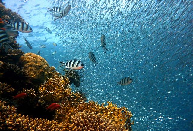 El océano, vida y sustento