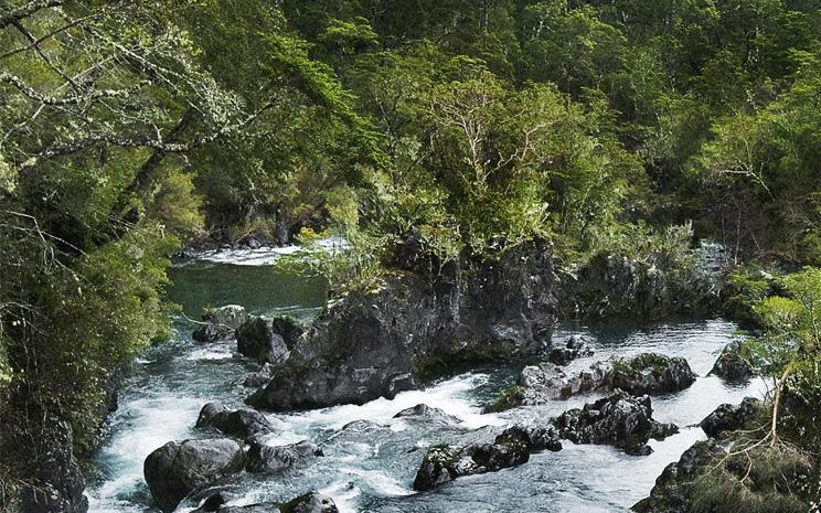 CNA acredita al Doctorado en Conservación y Gestión de la Biodiversidad de la Universidad Santo Tomás