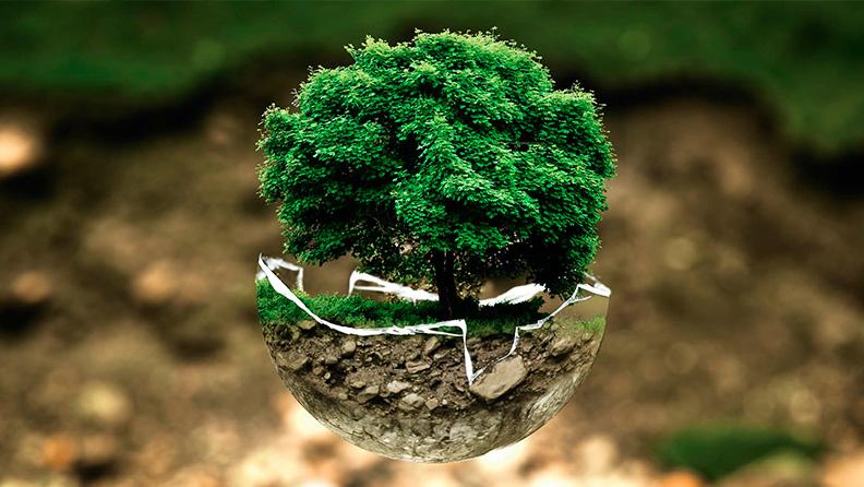 ecologia conservacion
