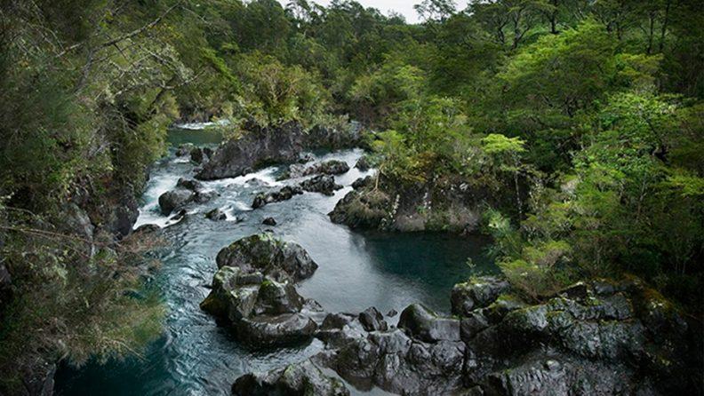 Doctorado-en-Conservacion-y-Gestion-de-la-Biodiversidad